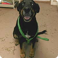 Adopt A Pet :: Hailey - Union Springs, AL