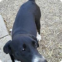 Adopt A Pet :: Rain - Baileyton, AL