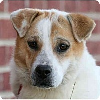 Adopt A Pet :: Krissie-In MAINE! - kennebunkport, ME
