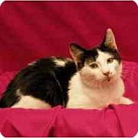 Adopt A Pet :: Chelsea - Sacramento, CA