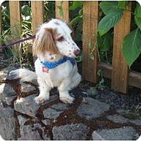 Adopt A Pet :: LEONARDO - Portland, OR