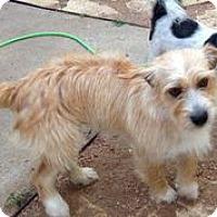 Adopt A Pet :: Derby - Austin, TX