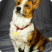 Adopt A Pet :: Punkin - Inola, OK