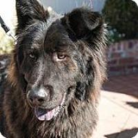 Adopt A Pet :: Mko/Bear - San Francisco, CA