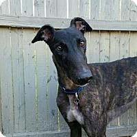 Adopt A Pet :: Dennis - Swanzey, NH