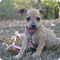 Adopt A Pet :: Melinda - Charlemont, MA