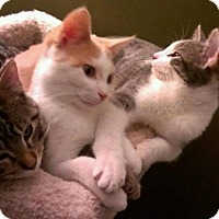 Adopt A Pet :: Butterfinger and Snickers - St. Paul, MN