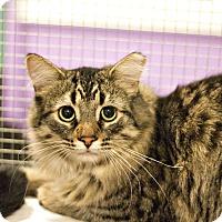 Adopt A Pet :: Goody - Lincoln, NE