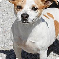 Adopt A Pet :: Pandora - Washington, DC