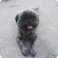 Adopt A Pet :: Mocha - Willingboro, NJ