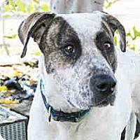Adopt A Pet :: Jessie - Agoura, CA