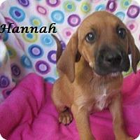 Adopt A Pet :: Hannah - Bartonsville, PA