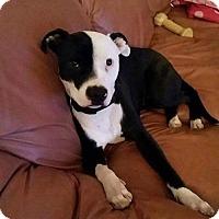 Adopt A Pet :: Nemo / Courtesy Posting - Tucson, AZ