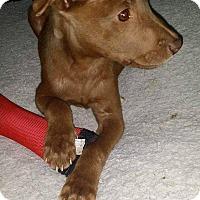 Adopt A Pet :: Benny - Smithtown, NY