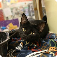 Adopt A Pet :: Vanity - Rochester, MN