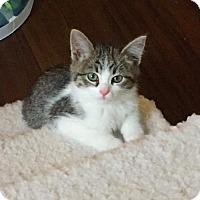 Adopt A Pet :: Mister Fuzz Bottom III C1538 - Shakopee, MN