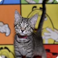 Adopt A Pet :: Baby Spice - Medina, OH