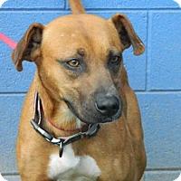 Pit Bull Terrier Mix Dog for adoption in Randleman, North Carolina - Liz