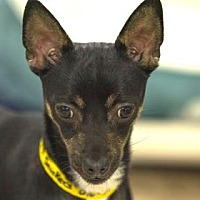 Adopt A Pet :: Snickers - Colorado Springs, CO