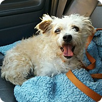 Adopt A Pet :: Opie - Newport Beach, CA