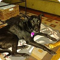 Adopt A Pet :: CJ - Lancaster, PA