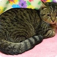 Adopt A Pet :: Chandler - Columbus, NE