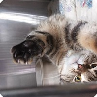 Adopt A Pet :: Eliza - Akron, OH