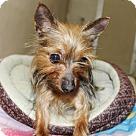 Adopt A Pet :: 23861 Ella