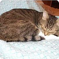 Adopt A Pet :: Kater - Montreal, QC