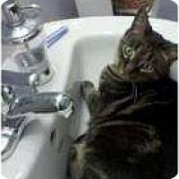 Adopt A Pet :: Phoenix - Warminster, PA