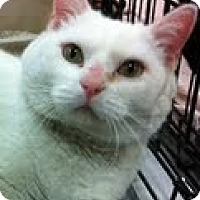 Adopt A Pet :: Sweetie Pie - Modesto, CA