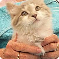 Adopt A Pet :: Louie - Reston, VA