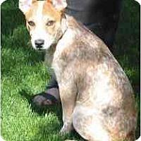 Adopt A Pet :: Rebel - Phoenix, AZ