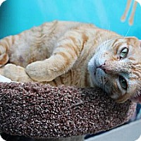 Adopt A Pet :: Cody - Newport Beach, CA