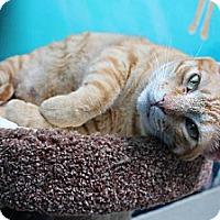 Adopt A Pet :: Cody - Newport Beach, CA