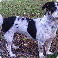 Adopt A Pet :: Bodie - Orlando, FL