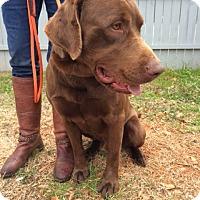 Adopt A Pet :: Goose - Charleston, SC