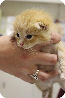 Wichita Cat Rescue
