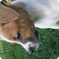 Adopt A Pet :: Reed Richards (Mr Fantastic) - Mechanicsburg, PA