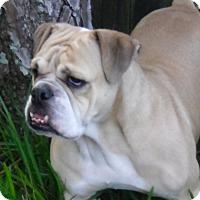 Adopt A Pet :: GLORIA - Odessa, FL