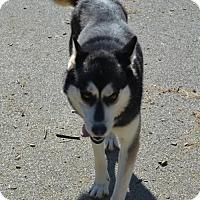 Adopt A Pet :: Simon - Erwin, TN