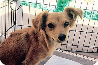 Dog Rescue Store In La Quinta
