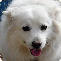 Adopt A Pet :: Holly - MINNEAPOLIS, KS