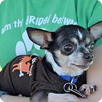 Adopt A Pet :: Neeko - Fairfield, OH