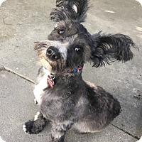 Adopt A Pet :: Kobe - Encino, CA