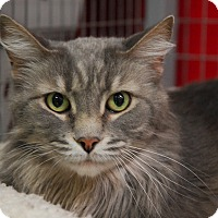 Adopt A Pet :: Dusty - Winchendon, MA
