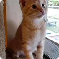 Adopt A Pet :: Archer - Chattanooga, TN