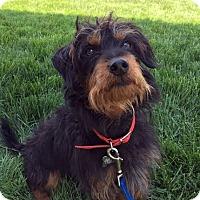 Adopt A Pet :: Murphy-Adopted! - Detroit, MI