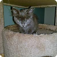 Adopt A Pet :: Miss Gray - North Brunswick, NJ