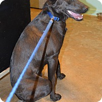 Patterdale Terrier (Fell Terrier)/Collie Mix Dog for adoption in Prole, Iowa - Bear Lee